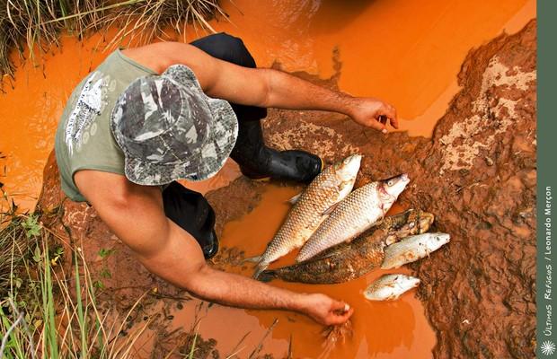 peixes-mortos-no-rio-doce-1